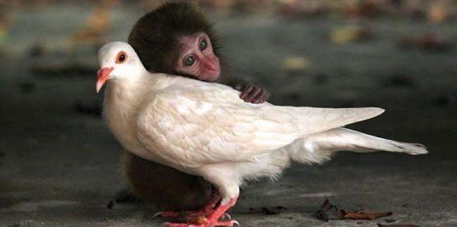 compassion hug